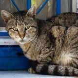 Chat tué à l'acide : deux ados relaxés, le dernier condamné à de la prison avec sursis