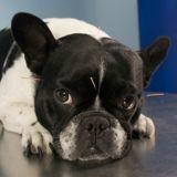 Tout savoir sur l'acupuncture pour chiens et chats