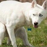 Quand l'ADN des déjections devient une menace pour les propriétaires de chiens