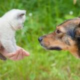 Adopter un chat quand on a déjà un chien : bonne ou mauvaise idée ?
