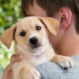 10 choses que personne ne vous dit lorsque vous adoptez un chien