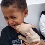 Heureux de recevoir son chien, ce petit garçon fond en larmes (Vidéo du jour)