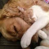 La SPA enregistre une hausse spectaculaire des adoptions de chiens et chats !