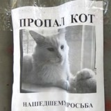 Il passe devant une affiche pour un chat perdu, s'arrête et n'en croit pas ses yeux (Vidéo)