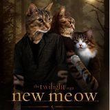 Les affiches de films détournées par des chats (Photos)