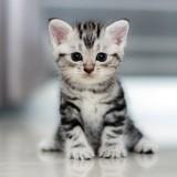 Comment accompagner le passage de mon chaton vers l'âge adulte ?