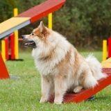 Le championnat de France d'agility a fait sauter les plus grands athlètes canins !