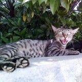 Japon : Que risque le chat soupçonné de tentative de meurtre ?