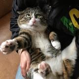 Ce chat qui fait des grimaces incroyables fait rire le monde entier