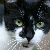 Dans l'Aisne, des chats disparaissent mystérieusement