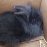 Des animateurs radio tuent un lapin en direct et provoquent l'indignation