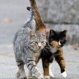 Les chats d'Albertville héritent de 300 000 euros
