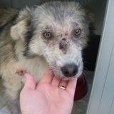 Elle affronte sa peur des chiens pour sauver la vie de l'un d'entre eux