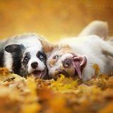 Prenez quelques minutes pour admirer ces superbes photos de chiens