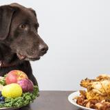 Quels sont les aliments dangereux à ne donner sous aucun prétexte à son chien ? Un vétérinaire vous éclaire !