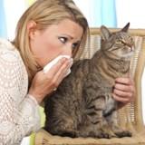 Créer des chats OGM hypoallergéniques : et si c'était possible ?