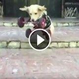 Cette chienne n'a que deux pattes… mais ça ne l'empêche pas de bondir de joie ! (Vidéo du jour)