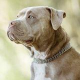 Après avoir défenestré son chien, un homme récidive à sa sortie de prison en poignardant une chienne