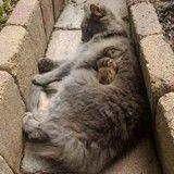 Cette incroyable amitié entre un écureuil et un chat va vous faire craquer ! (Vidéo du jour)