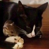 L'amitié incroyable d'un chat… et d'une souris ! (Vidéo du jour)