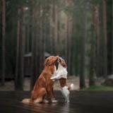 10 photos de chiens qui s'aiment plus que tout