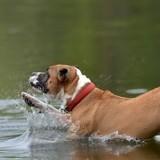 Elle plonge dans une eau à 6 degrés pour sauver un chien de la noyade