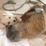 Laissé pour mort après un accident, un âne trouve du réconfort auprès d'un chiot