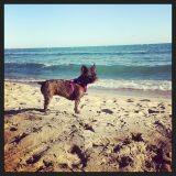 Vos chiens et leurs photos de vacances