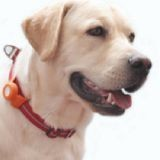 Il est maintenant possible de savoir ce que pensent les chiens et chats… grâce à un collier !