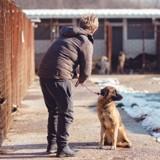 En Californie, une nouvelle loi oblige les animaleries à vendre uniquement des animaux issus de refuges