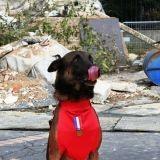 Chiens sauveteurs de Haïti : les stars d'Animal Expo