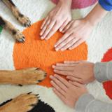 Covid 19 et association de protection animale : lettre ouverte au gouvernement