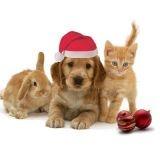 Des idées de cadeaux de Noël pour tous vos animaux de compagnie !