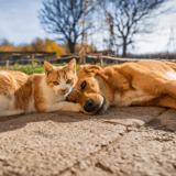 Journée mondiale des animaux : la ville de Montreuil s'engage pour le bien-être animal