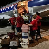 L'avion atterrit : quand les portes s'ouvrent, 130 chiens et chats accourent vers leurs nouvelles familles