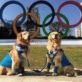 Oui, les animaux de compagnie ont aussi leurs Jeux olympiques !