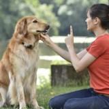 Comment apprendre le «non» à son chien?