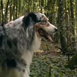 Un chien et son maître courent très vite en pleine forêt… mais pas pour la raison que vous imaginiez (Vidéo)