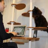 Coup de coeur pour ce bureau arbre à chat : et si travailler avec un chat devenait possible ?