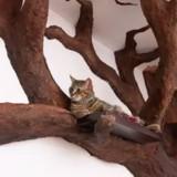 Il fabrique un arbre à chat grandeur nature pour son matou et le résultat est dingue