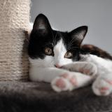 L'arbre à chat : pourquoi est-il indispensable et comment le choisir ?