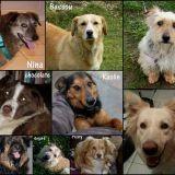 L'Arche d'Eternité, une association qui sauve les chiens de Roumanie