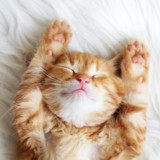 Le royal baby tient peut-être son prénom d'un chat !