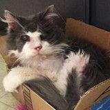 Abandonné pour être euthanasié, ce vieux chat de 19 ans a eu beaucoup de chance