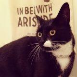 Un 1er anniversaire couronné de ronrons pour l'hôtel pour chats Aristide