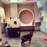 Aristide, l'hôtel pour chat qui donne une furieuse envie d'être un chat