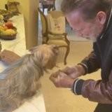 Coronavirus - Covid-19 : Arnold Schwarzenegger sensibilise ses fans avec l'aide de ses animaux !