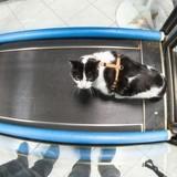 L'arthrose du chat : prévention, symptômes et traitement