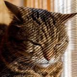 Arthrose chez le chat et le chien : prévention, symptômes et traitement