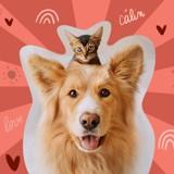 """""""Evaluer le bien-être d'un animal sans en avoir, c'est impossible"""" : un vétérinaire donne les clés pour mieux comprendre son animal"""
